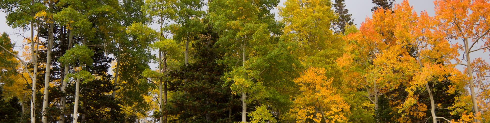 img_5892-fall-closer-leaves